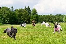 dogparkdogs