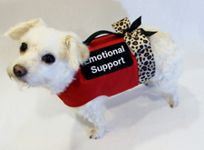Support-animal-1